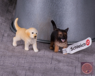 mfm schliech puppy-2614